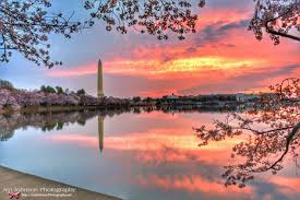 Cherry Blossom Facts by D C Area Forecast A Warm Start To The Week Then Temperatures