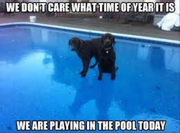 Black Lab Meme - funny animal pictures of the day 24 pics