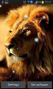 imagenes de leones salvajes gratis descargar lions para android gratis el fondo de pantalla animados