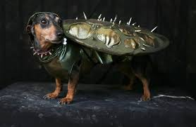 Halloween Costume Ideas For Pets Halloween Costume Ideas For Your Pets 100 7 Star