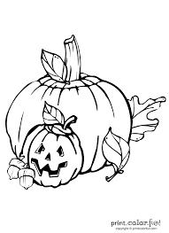 pumpkin and jack o lantern coloring page print color fun