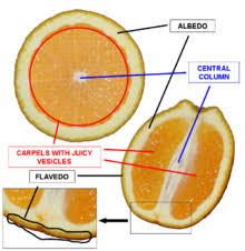 What Is Orange Flower Water - zest ingredient wikipedia