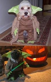 Halloween Costume Ideas For Pets 102 Best Costume Ideas Images On Pinterest Costume Ideas