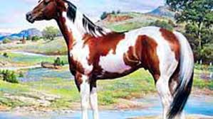 american paint horses become movie stars expert advice on horse