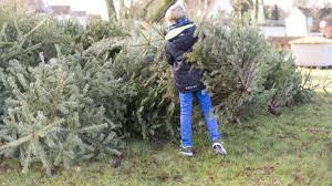 christmas tree recycling kyle tx temple tx official website parks