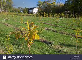 100 christmas tree farm eustis fl christmas tree fram