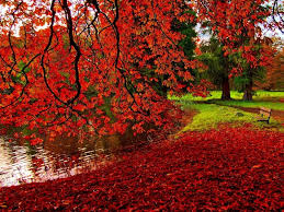 autumn season wallpapers one hd wallpaper pictures backgrounds