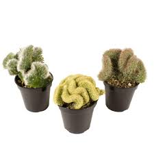 succulent planters for sale 6 in assorted donkey tails hanging basket plant 0881003 the