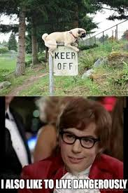 I Also Like To Live Dangerously Meme - 100 hilarious pug memes pictures
