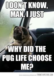 Sad Pug Meme - introspective pug questions his existence the meta picture