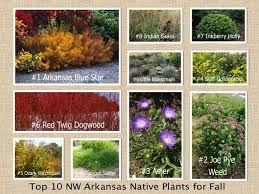 12 10 native plants fall nw arkansas images