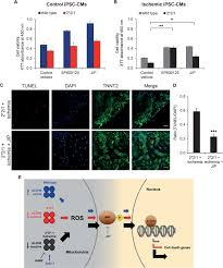 characterization of the molecular mechanisms underlying increased