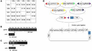 multiplex conditional mutagenesis using transgenic expression of