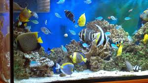 india s 1st ornamental fish park in chennai