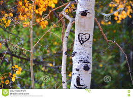 initials carved in tree heart and initials on a tree stock photo image 73066192