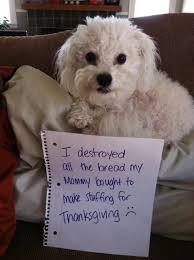 hilarious photos of dogs who thanksgiving dinner