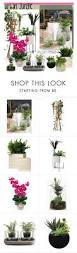 casa home decor 1087 best polyvore images on pinterest jungles converse and