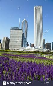 flowers garden city illinois chicago flowers bloom in lurie garden part of millennium