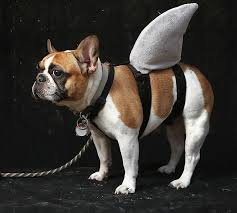 Funny Animal Halloween Costumes 439 Halloween Costumes Images Costume Ideas