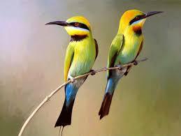 birds on a branch digital by snake jagger