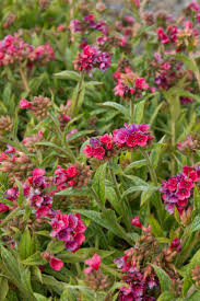 native australian ground cover plants the 25 best groundcover for shade ideas on pinterest ground