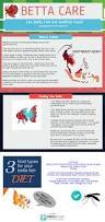 best 20 fish care ideas on pinterest pet fish fish tank and