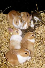 632 best bunnies images on pinterest bunny rabbits baby bunnies