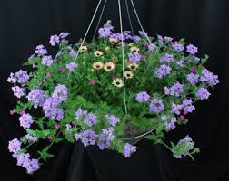 lowes large sunny annual hanging basket minot flower delivery