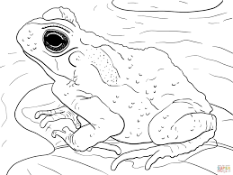 juvenile cane toad coloring page free printable coloring pages