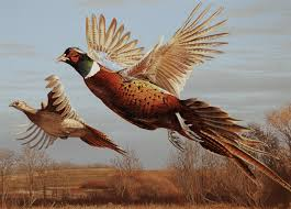 Pheasant Home Decor by 37 Best Pheasant Images On Pinterest Pheasant Pheasant Hunting