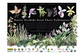 pollinators of native plants pollinators outreach and education