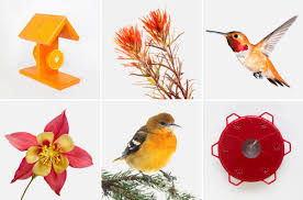 bird attracting native plants the audubon guide to attracting hummingbirds and orioles audubon