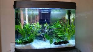 Live Plants In Community Aquariums by 2 Easy Ways To Clean A Fish Tank Wikihow