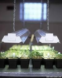 13 secrets to starting seeds indoors martha stewart