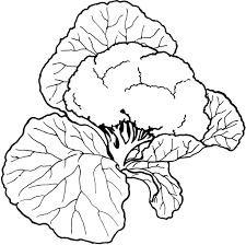 colouring pictures vegetables vegetable coloring pages to print