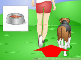 how to get your dog to eat the dog food it does not like 14 steps