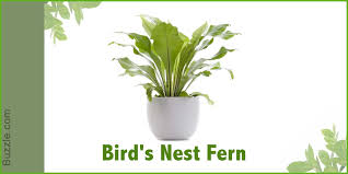 Plants That Survive With No Light Dress Up Your Home With These Indoor Plants That Don U0027t Need Sunlight