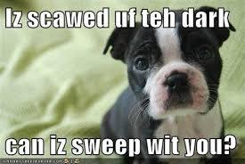 Boston Terrier Meme - th id oip uyzdogtr1xysy3g4kztrrqhae9