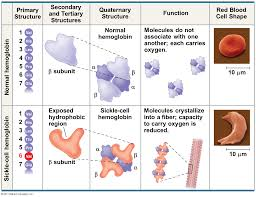 cell and molecular biology for diagnostic and therapeutic
