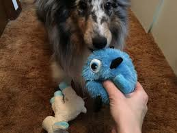 afghan hound collie mix ask a dog trainer how to help dogs that fixate u2013 iheartdogs com