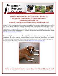 rescue a boxer dog boxerrescuequebec com