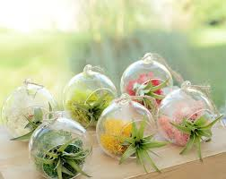 small hanging glass vase air plant terrarium
