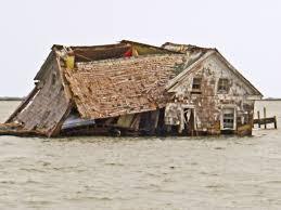 chesapeake bay native plants bay daily the last house falls on a sinking chesapeake bay island