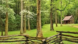 forests peaceful beautiful lovely serenity trees fence grass