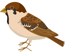 Sparrow by Sparrow Png Images Free Download