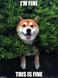 Shiba Meme - shiba itsu handles being trapped in a bush imgflip