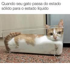 Gato Meme - 25 best memes about gato gato memes