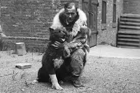 nearly a century after balto u0027s serum run made the husky a