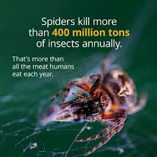 Kill Spider Meme - spiders kill a mind boggling number of insects so maybe you shouldn