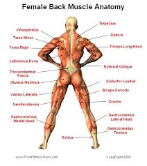 Female Anatomy Reference 99 Best Character Anatomy Buttocks Images On Pinterest Anatomy